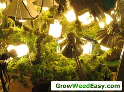 Nebulas first grow with CFLs a long time ago...