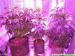 Pro-Grow X5-300 LED grow light, 5 Watt chips.
