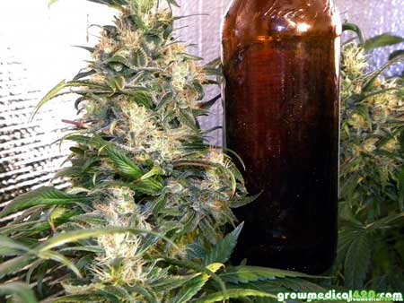 Bottle for size reference - Fat-Ass Bubblelicious colas up top! This strain just loves the LED grow panel so far!