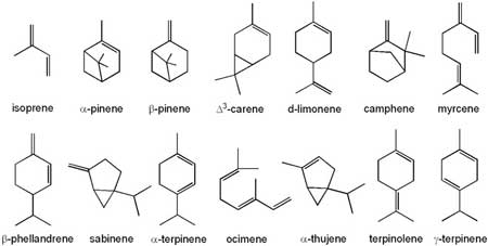 Examples of terpenes - this diagram shows their chemical structure