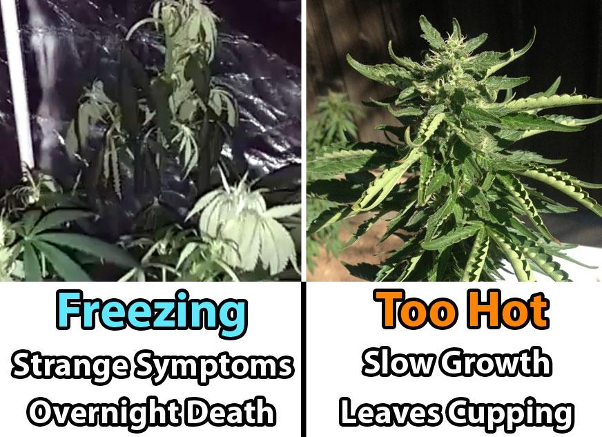 Cannabis Temperature Tutorial Grow Weed Easy