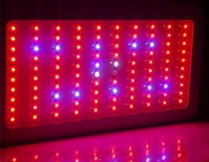 LED grow lights are a common culprit for cannabis light burn