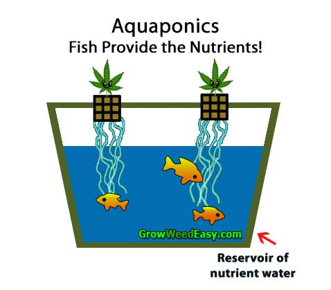 Growing cannabis with Aquaponics (plants get nutrients from live fish) hydroponics diagram