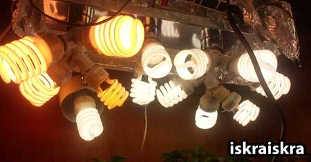 "A picture showing examples of CFL grow lights of different spectrums including ""bright white"" (6500k) and ""soft white"" (2700k) - both types are good for growing weed with CFLs"