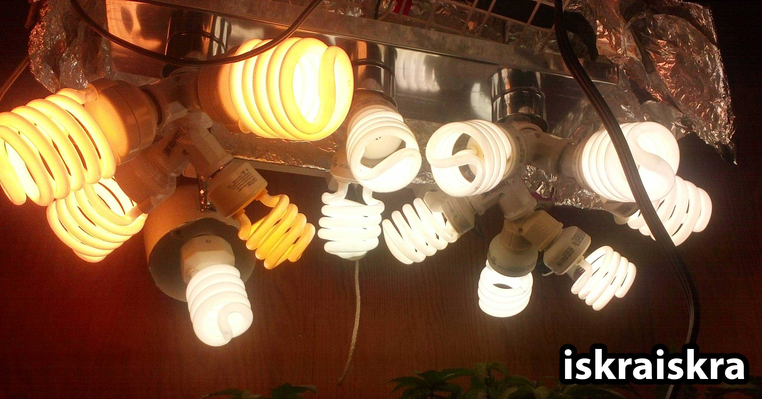 How To Grow Weed With Cfls Easy