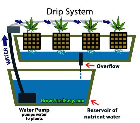 Growing cannabis with Drip System hydroponics diagram - flexible grow method can be used with soil, soilless or hydro