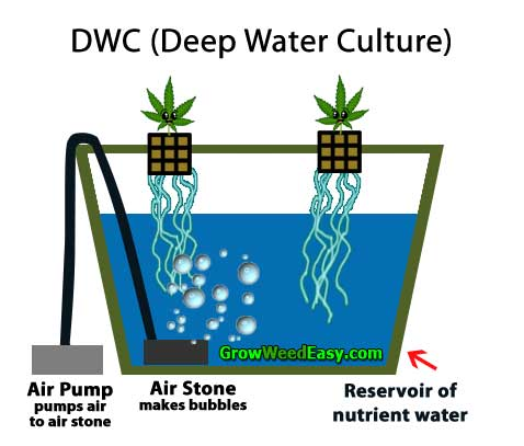 Growing cannabis with DWC (deep water culture) hydroponics diagram