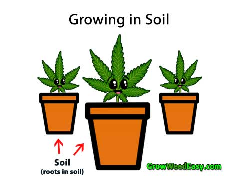 Growing Cannabis in Soil diagram