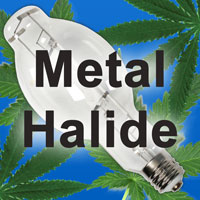 Metal Halide Grow Lights (MH) give off a wonderful light spectrum for marijuana's vegetative stage