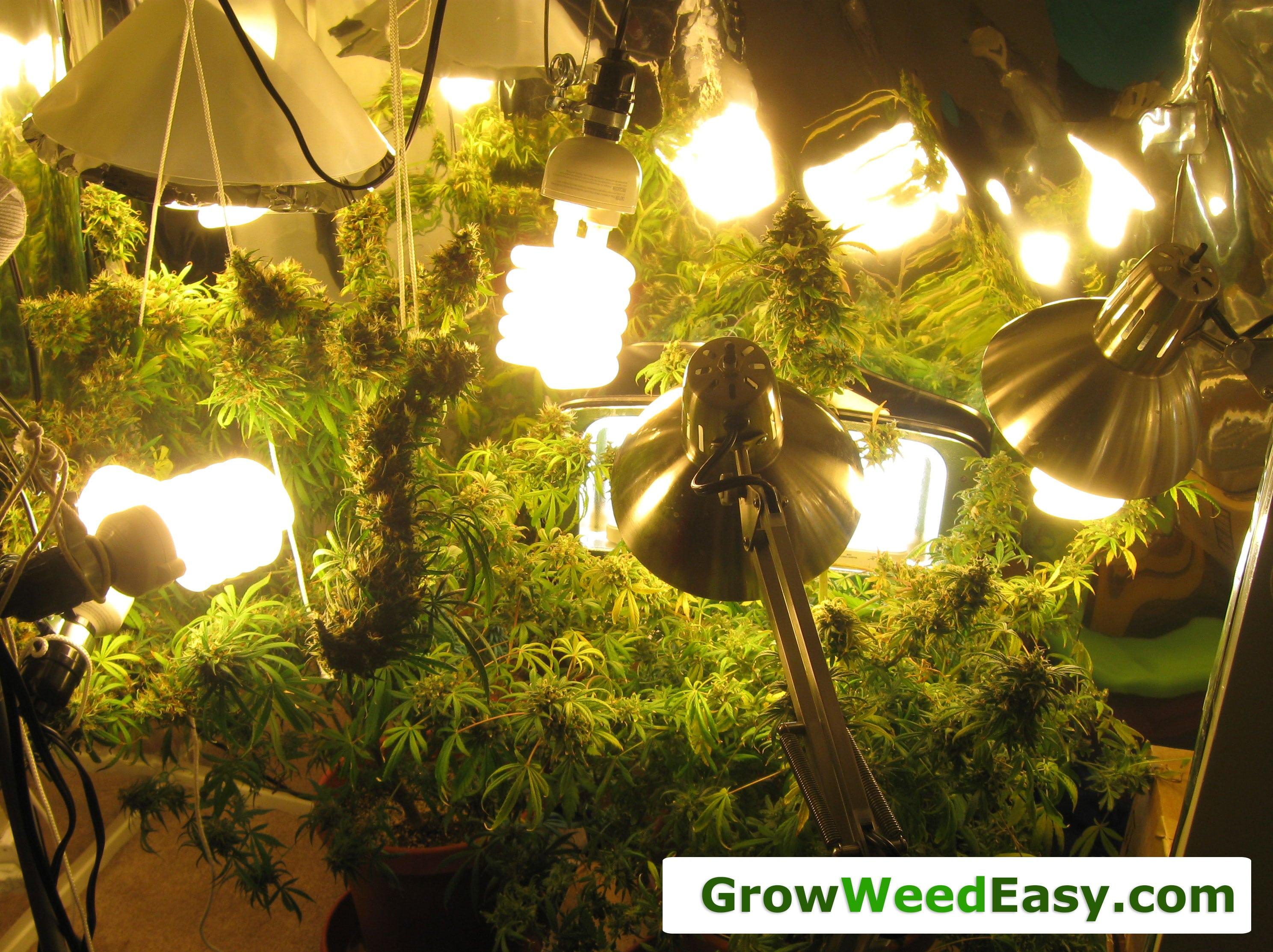 tent in light with pinterest grown lighting lights pin grow mh hps herb