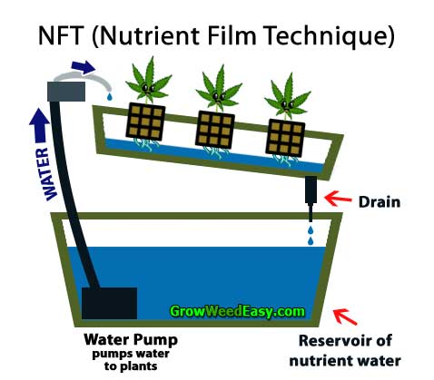 Growing cannabis with NFT (Nutrient Fulm Technique) hydroponics diagram
