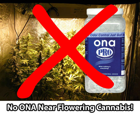 Never put Ona Gels near cannabis plants when they're flowering (making buds)