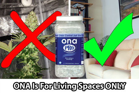 Ona products are great at covering up odors in your living spaces, but should never be placed near budding cannabis plants