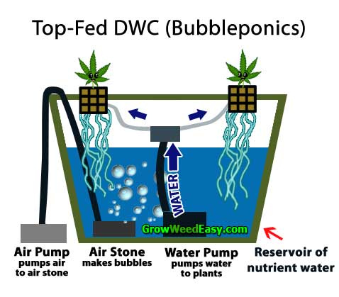 Growing cannabis with top-fed DWC (bubble cloud or bubbleponics) hydroponics diagram