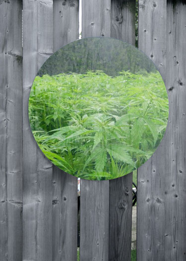 Mirrors are good for reflecting images - not at reflecting light back at your cannabis plants in the grow room