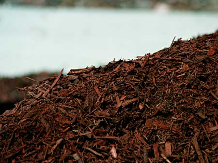A layer of mulch over the organic soil can help produce better conditions for your cannabis plants