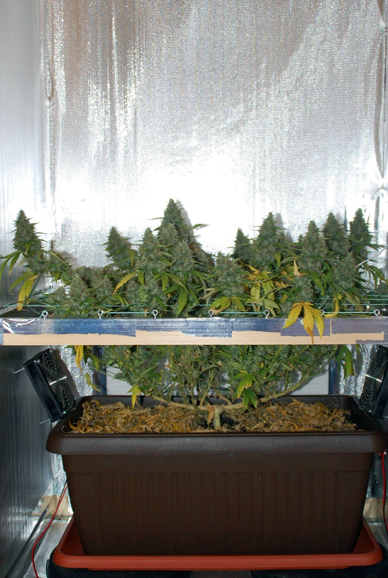 My secret garden @ 54 days (new DSLR camera)