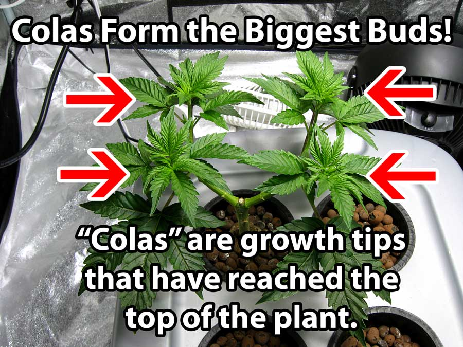 how to tell what type of weed seed you have