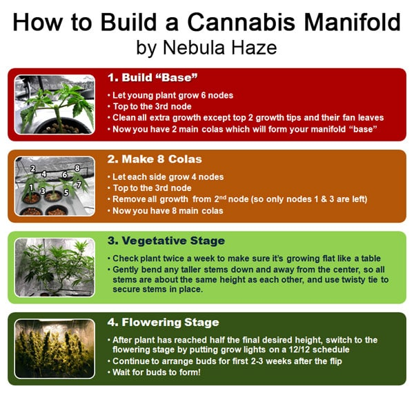 How to build a cannabis manifold diagram - This main-lining cannabis step-by-step tutorial teaches you how to manifold your marijuana plants!