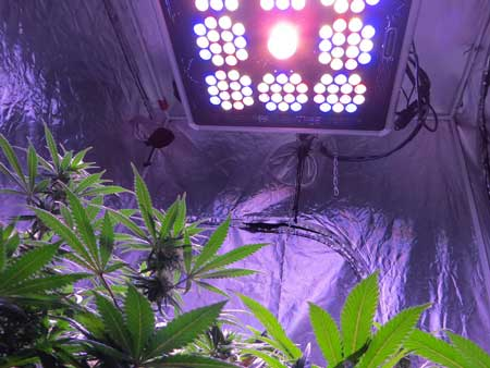 "LED grow lights need to be kept 18"" away from the tops of your plants or more"