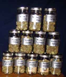 Cannabis yield - buds in mason jars