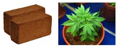 Coco coir for your cannabis grow