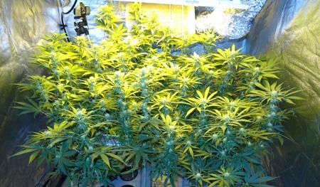 Buds have formed!