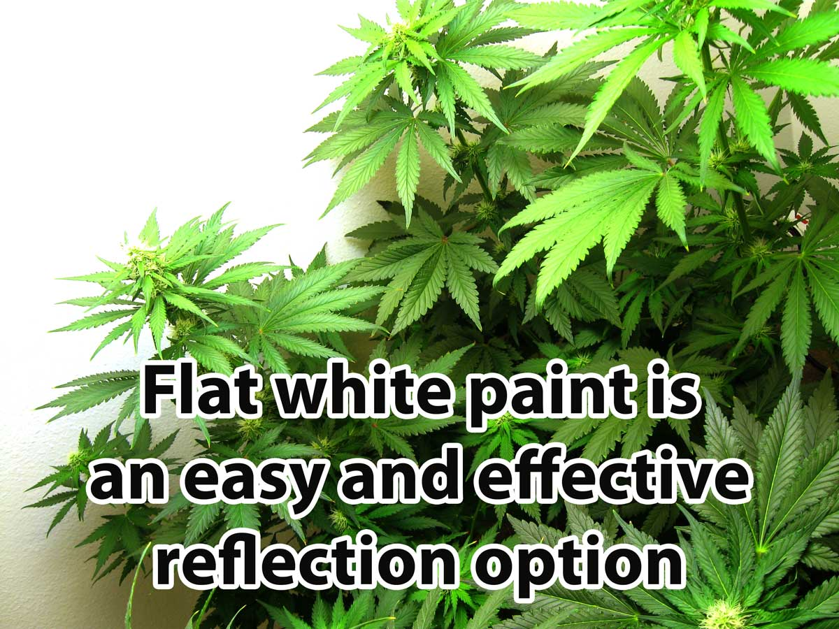 increase cannabis yields with reflective walls grow weed easy
