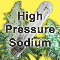 HPS (High Pressure Sodium) grow lights are perfect for flowering cannabis plants