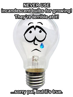 We don't want to mean to incandescent bulbs, but it's the truth!