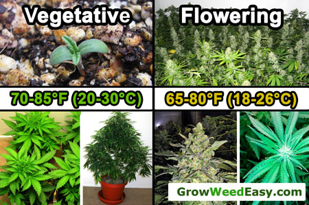 Optimal temperature for growing cannabis - Vegetative Stage is 70-85°F (20-30°C) - Flowering Stage is 65-80°F (18-26°C)