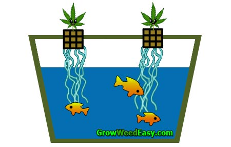 Growing cannabis with aquaponics diagram