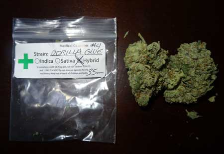 "Example of ""Gorilla Glue"" medical marijuana from a dispensary in California"
