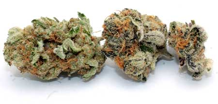 "An example of a medical marijuana bud, looks just like a regular bud, doesn't it? Many different strains of cannabis have ""medical"" effects, so medical marijuana can refer to a lot of things."