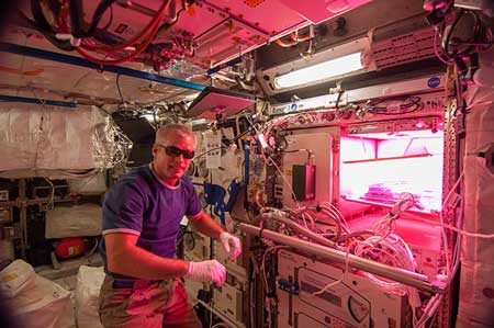 NASA has found that mold can sneak its way to the International Space Station and grow in space!