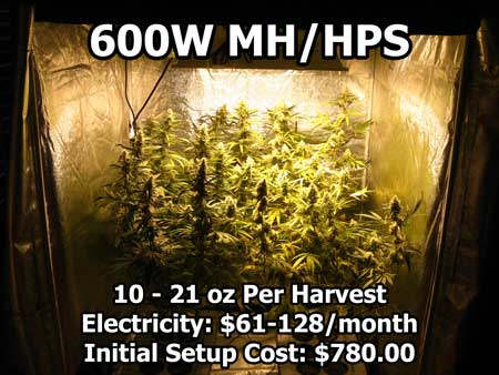 Over a pound of weed growing under a 600W HPS light