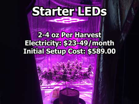 """Board-style, """"blurple"""" (blue and purple) LEDs over a cannabis ScrOG"""