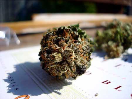 Purple cannabis nug with orange pistils