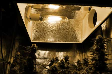 Looking up at a 250W HPS grow light - the light given off is yellow or orange colored