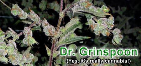 Get Dr. Grinspoon!