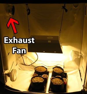 You just need an exhaust fan and a grow light to start growing cannabis in a tent!