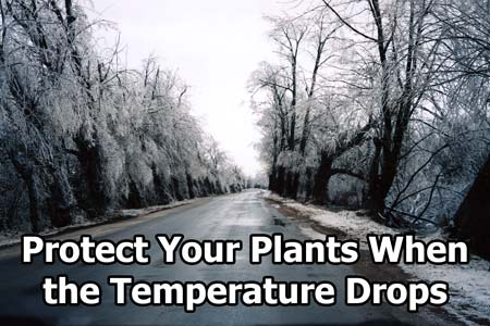 Do whatever you can to help keep your plants warm until it stops being so cold