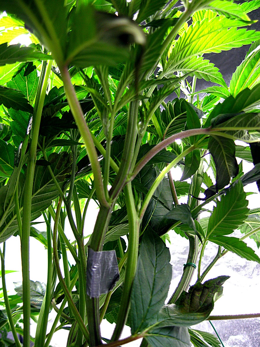 Cool Growing Tools You Might Not Know About | Grow Weed Easy