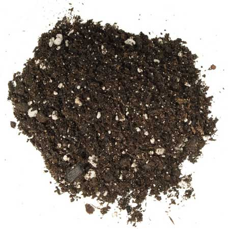 Example of good cannabis soil - Ocean Forest soil by Fox Farm