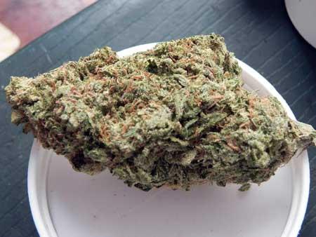 Jamaican Pearl cannabis buds
