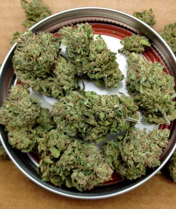 Example of dried and cured cannabis bud