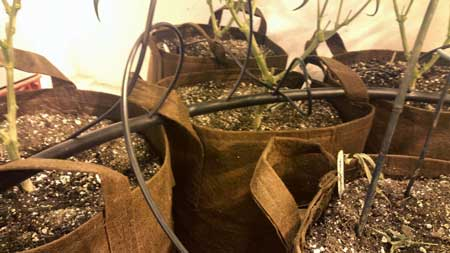 Auto-mated soil watering system for growing cannabis