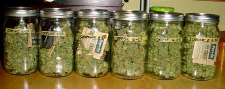 Example of curing buds in jars with Boveda 62 packs