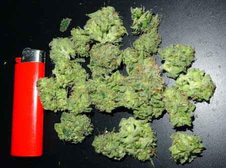 "Example of fresh or ""green"" buds"