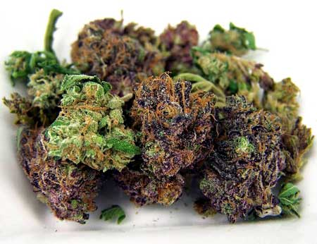 Purple and green cannabis buds